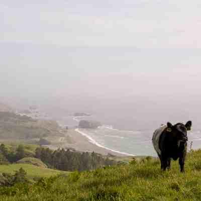Sea to Sky & Raptor Ridge – Jenner Headlands Preserve