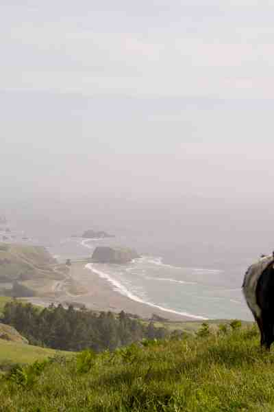 Sea to Sky and Raptor Ridge - Jenner Headlands Preserve Sonoma County | Hike Then Wine