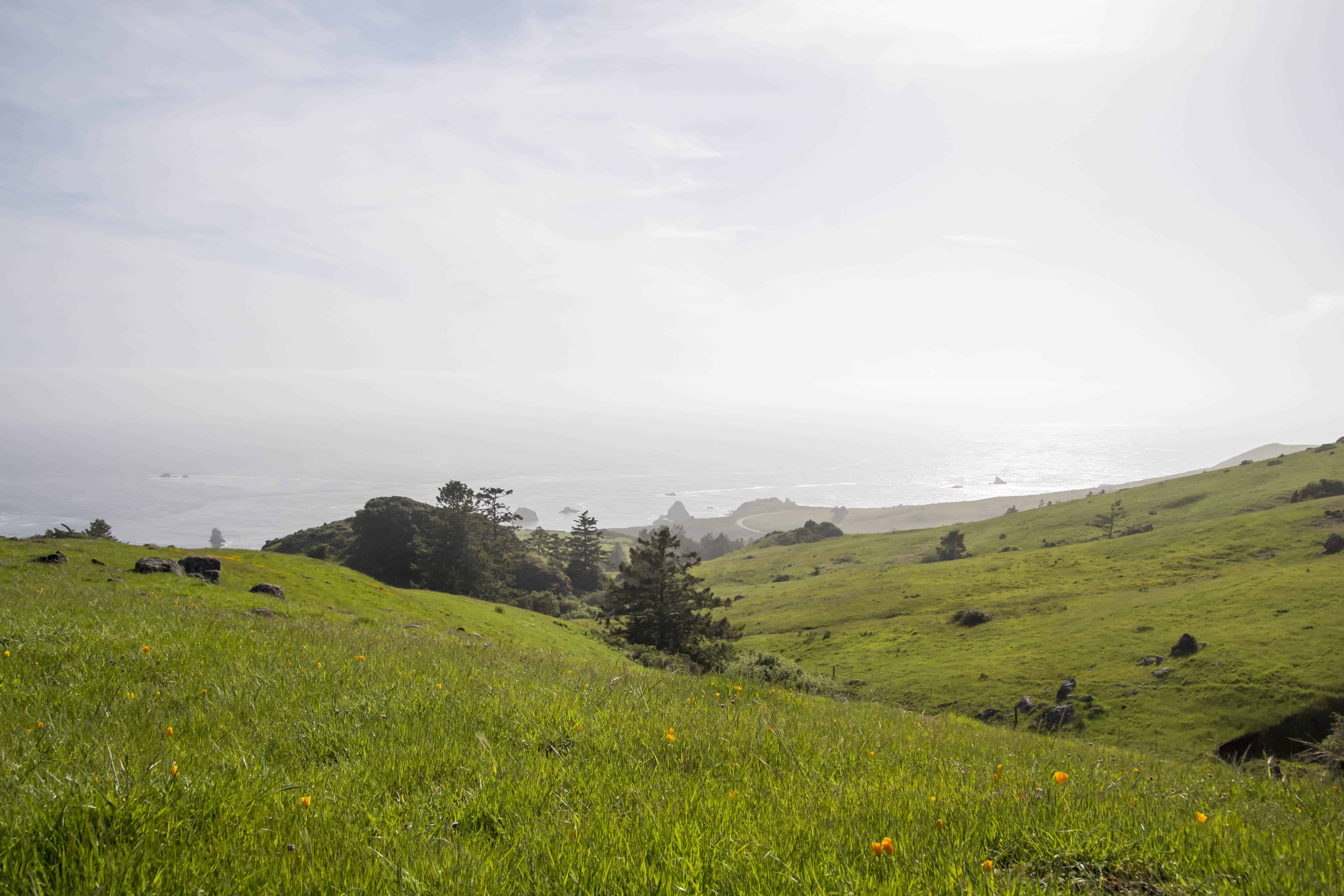 Sea to Sky and Raptor Ridge - Jenner Headlands Preserve Sonoma County | Hike Then Wine