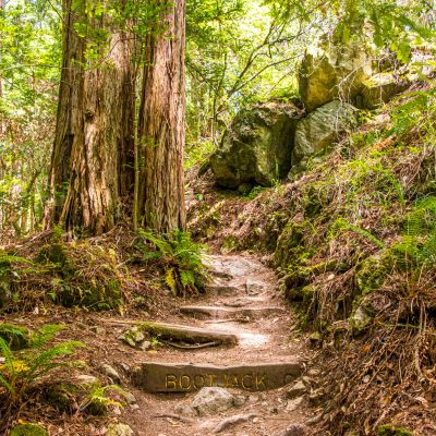 Kick-Your-Bootyjack Trail to Muir Woods – Marin