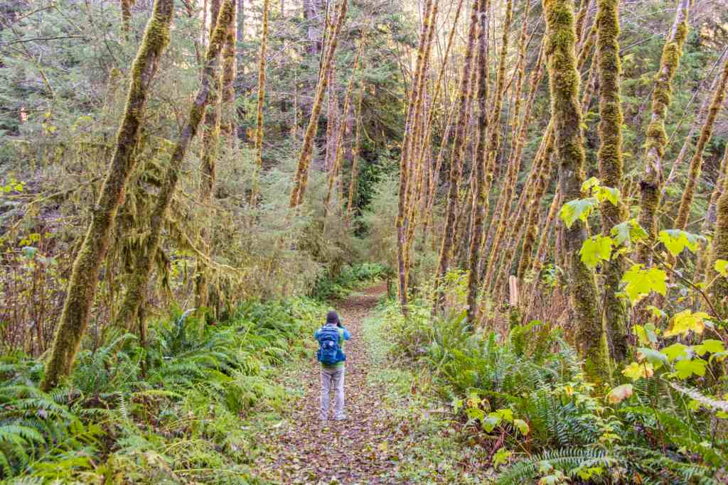 beginning of skunk cabbage trail