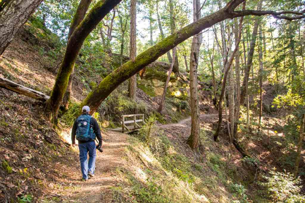 hiking on sequoia trail