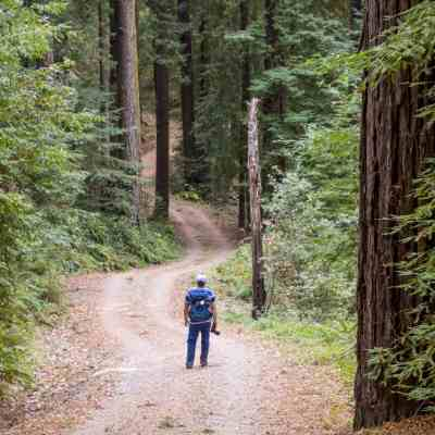 Bear Creek Redwoods Preserve – South Bay