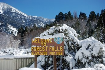 Forest Falls Snow, 2011