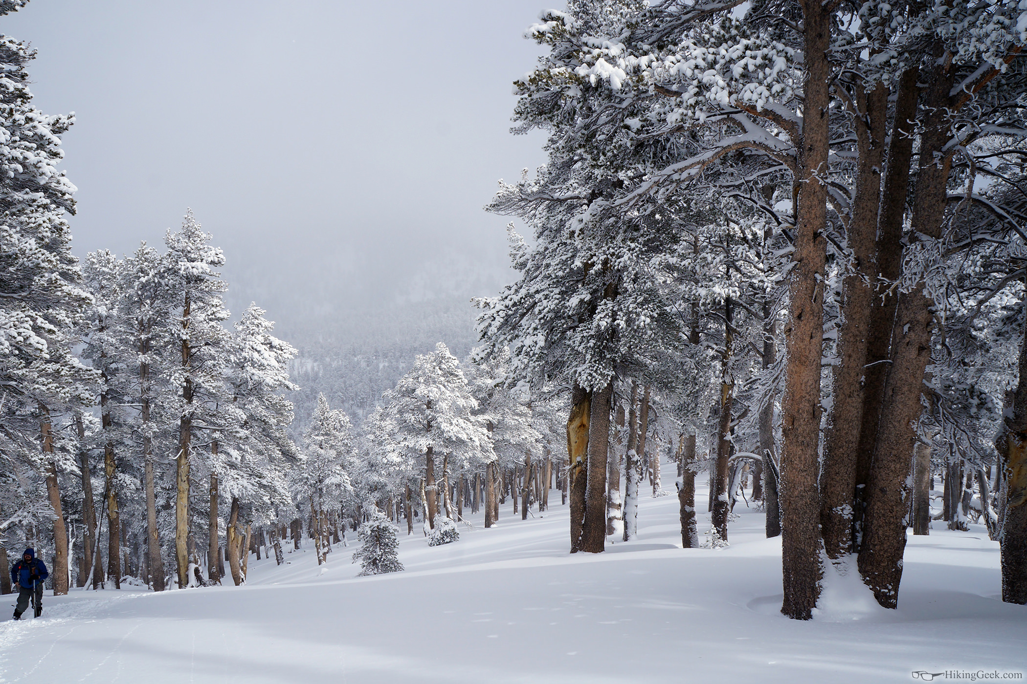 Charlton Peak Snowshoe, Jan 31 2015