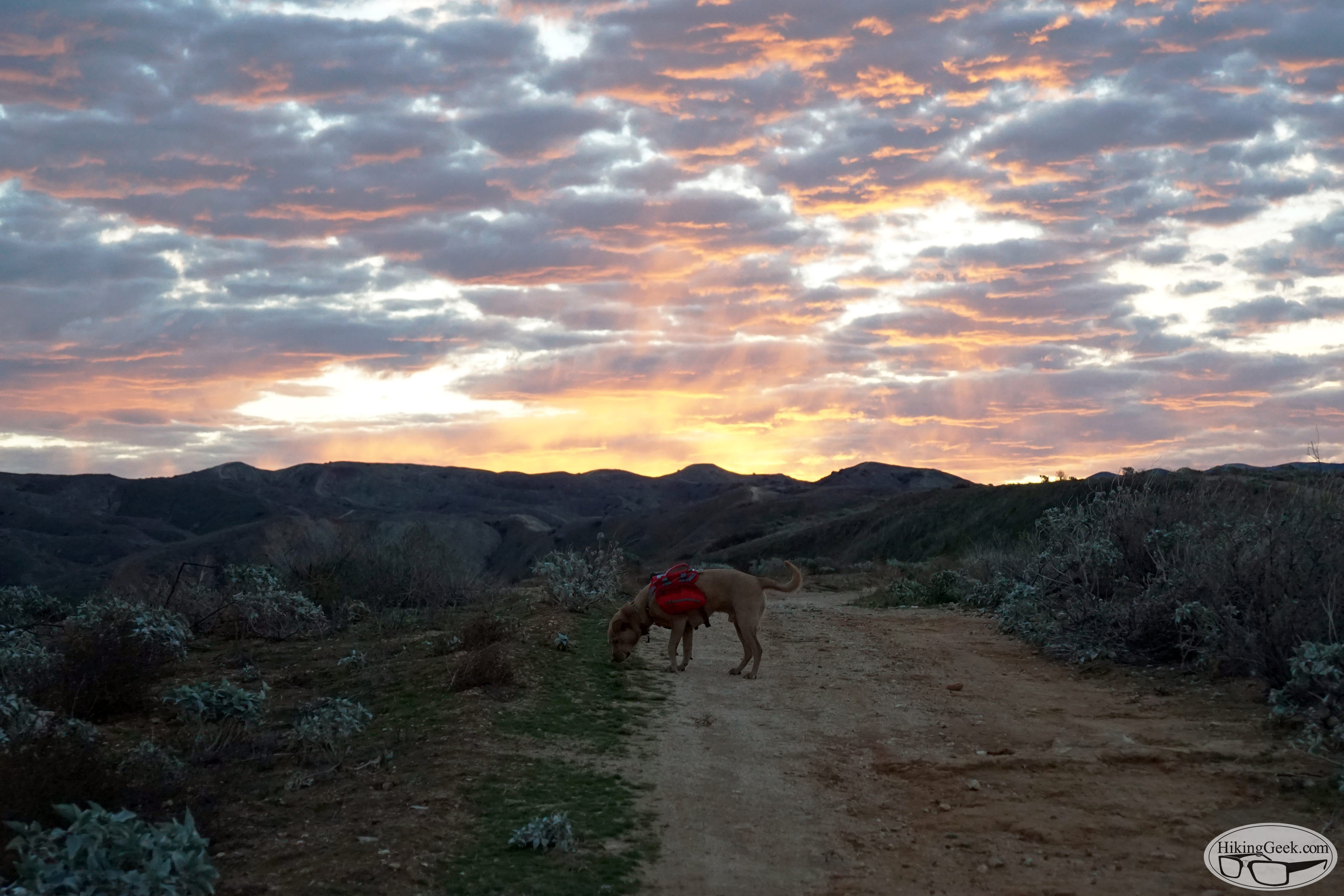 Hiking with Dogs: Training Hike & Gear Testing (Prado Lane), January 3 2016