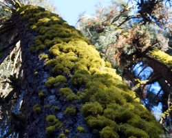 Moss covered tree, just above Buck Creek