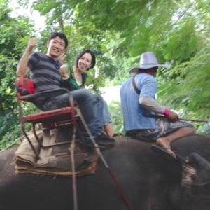 ゾウ、タイ