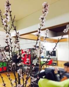 桃の花 節句