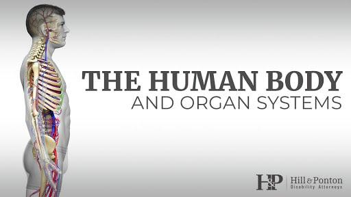 Human Body Organ Systems Hill Ponton P A