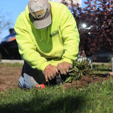 A Hillside Seasonal Services employee planting a plant