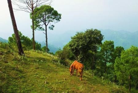 Karoh Peak – the highest point in Morni : Morni Hills