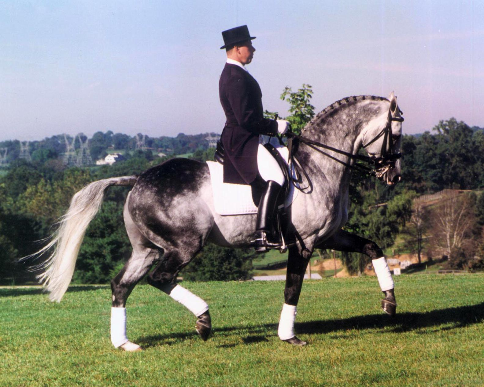 Image result for riverman dressage horse