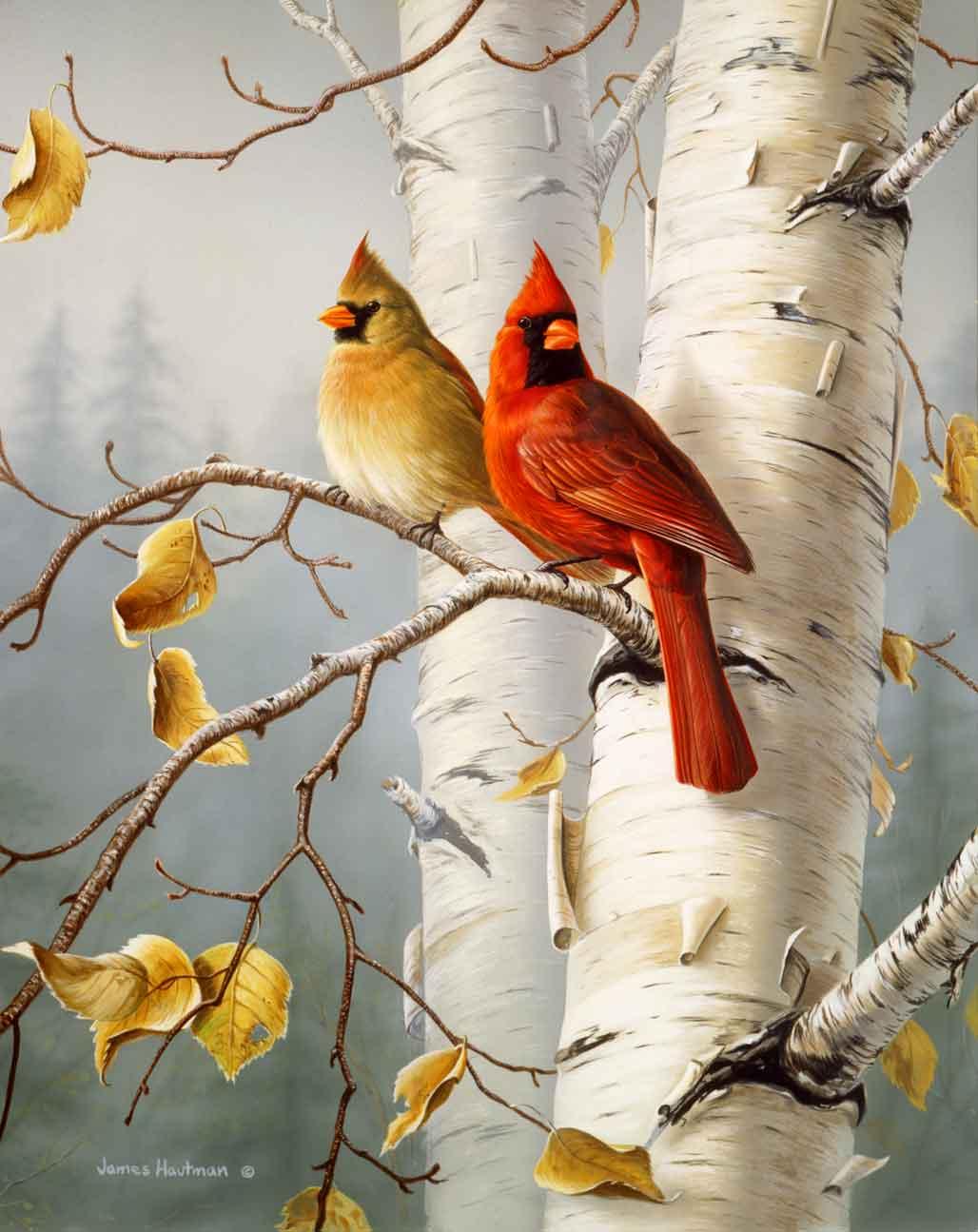 Cardinals West Virginia State Bird