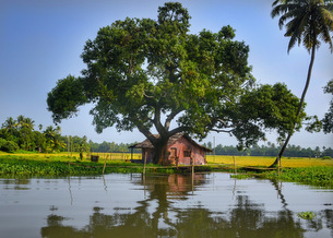Alleppey - The Venetian Capital of India 3