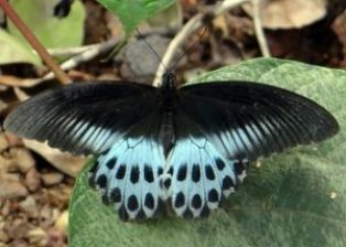 Butterfly at Mudumalai National Park, Ooty