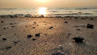 Water Nature Sand Seashore Beach