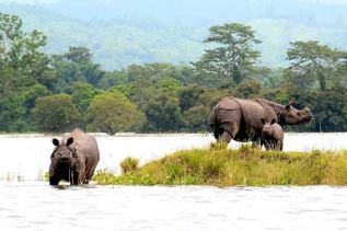 Kaziranga National Park 2