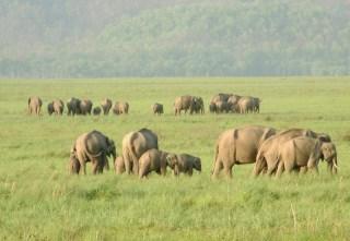 137201704Haridwar_Rajaji_National_Park_Main