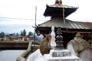 Palace of windows, patan, nepal