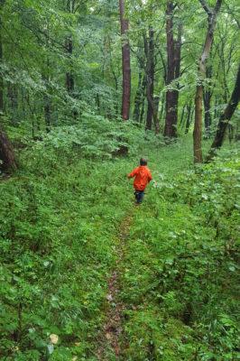 Kleine Entdeckerin im Wald