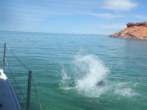 Derek enters Shark Bay