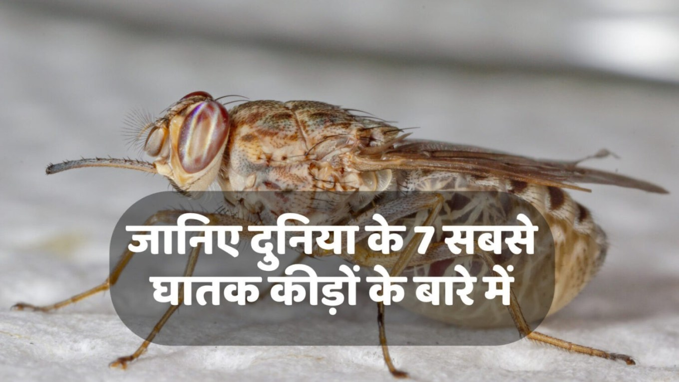 Deadliest Insects in the World