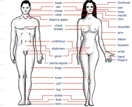 Human body parts name with picture