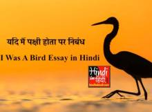 If I Was A Bird Essay in Hindi