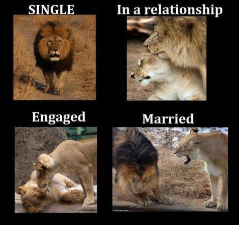 Single Life vs. Married Life (1)