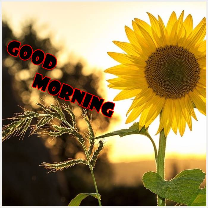 good morning photo hd (1)