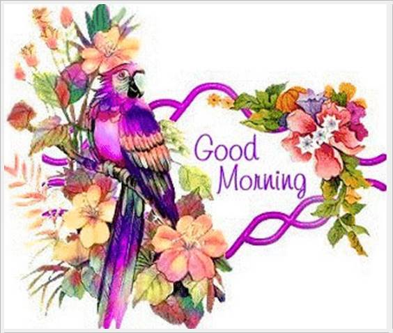 Good Morning Photo HD Images Wallpapers Pictures Pic For Whatsapp