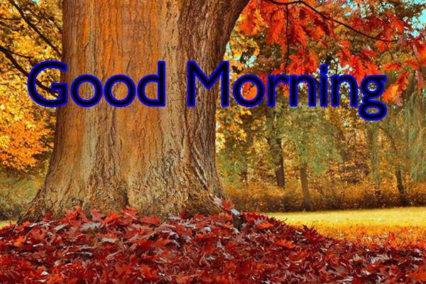 Good Morning Nature Images Photos HD 41