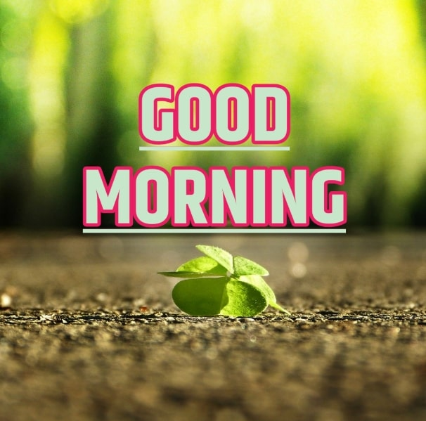 Best Good Morning Images HD Free Download 109