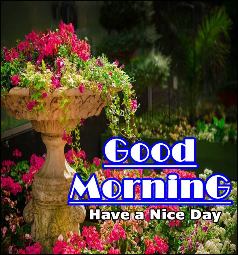Best Good Morning Images HD Free Download 113