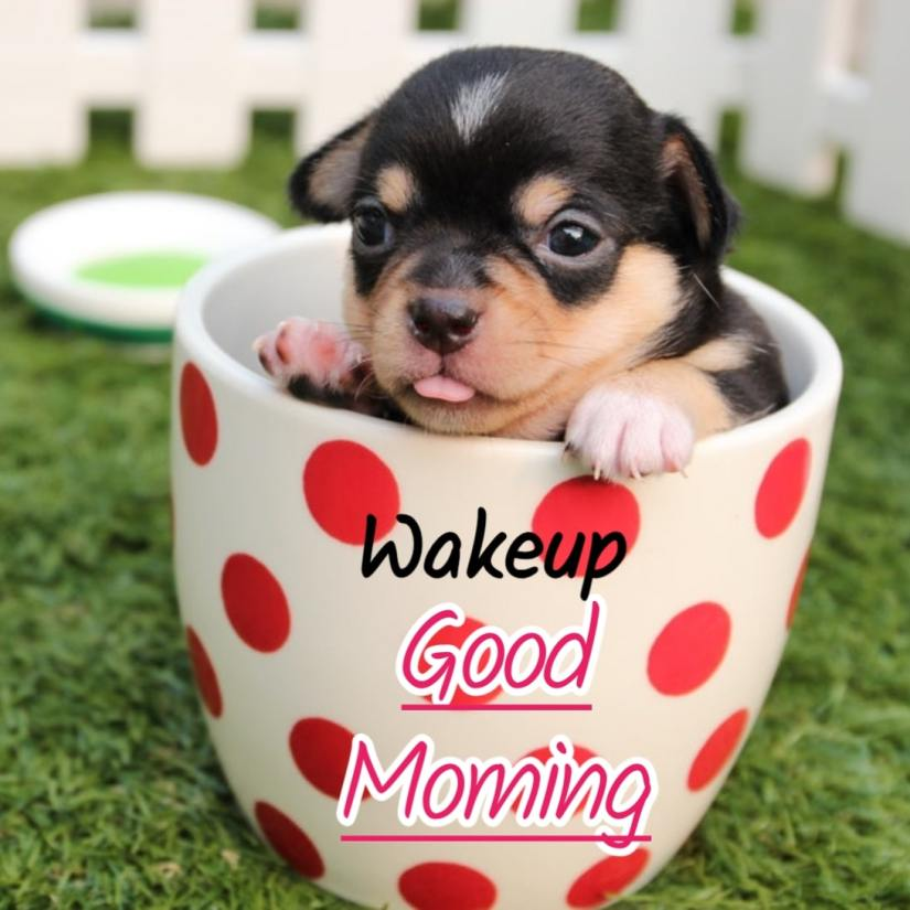 Best Good Morning Images HD Free Download 43