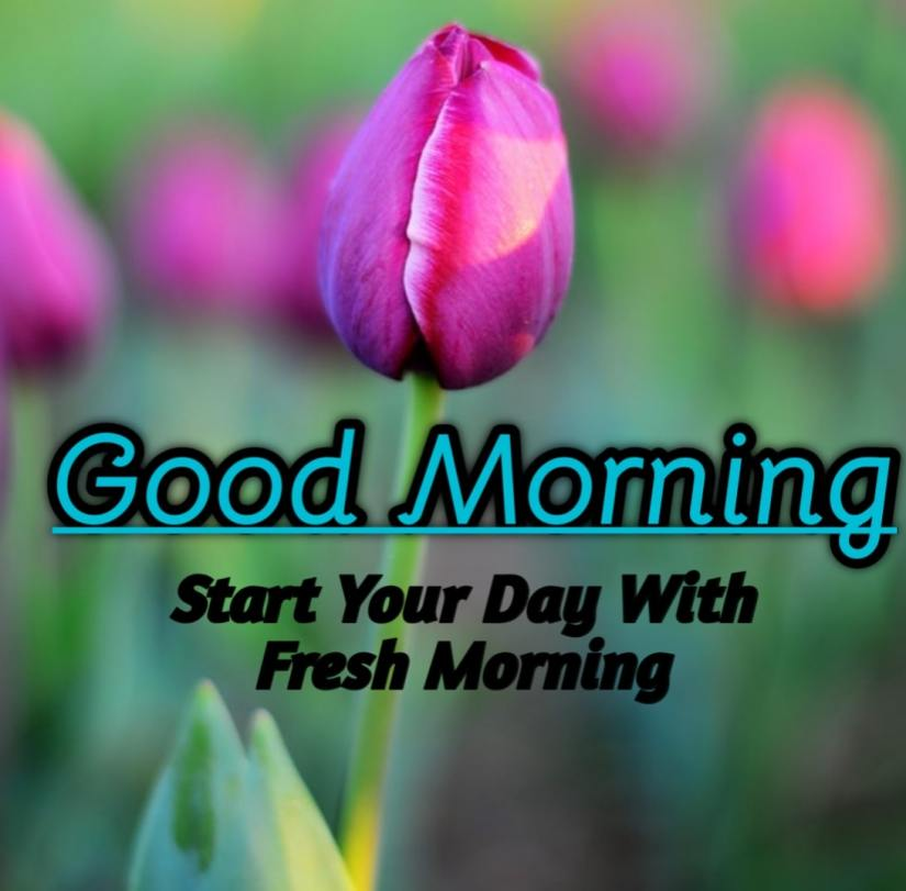 Best Good Morning Images HD Free Download 7