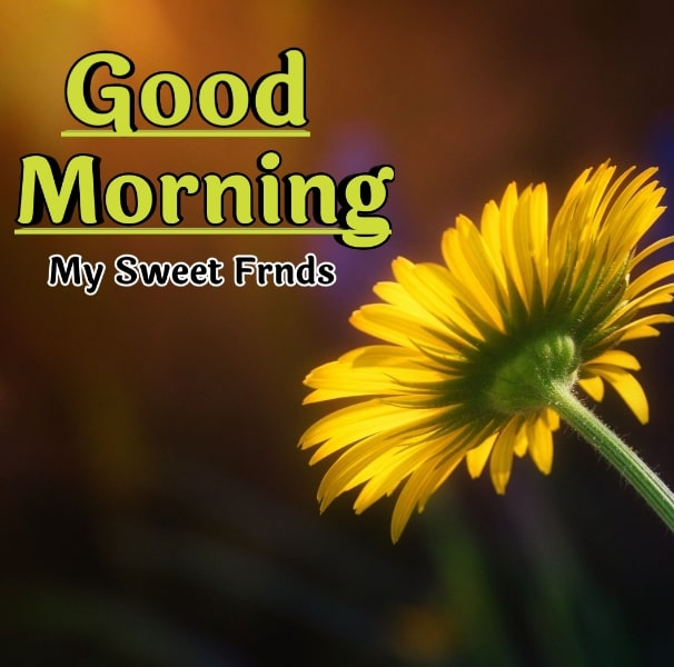 Best Good Morning Images HD Free Download 71