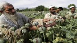 Afghanistan-drugs-opium-narco-jihad