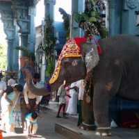 PETA India once again locks horns with temple elephant Lakshmi