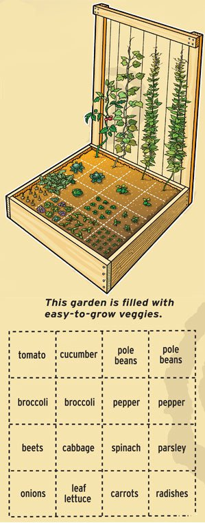 drawing of a garden box that has been divided into squares