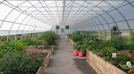 Gardening Questions Answered
