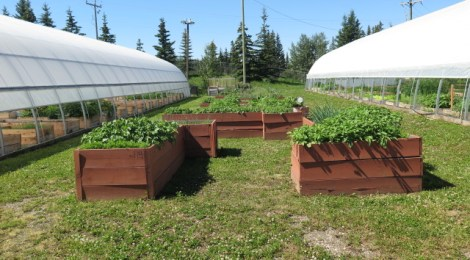 Greenhouse Opening Sunday May 8th!
