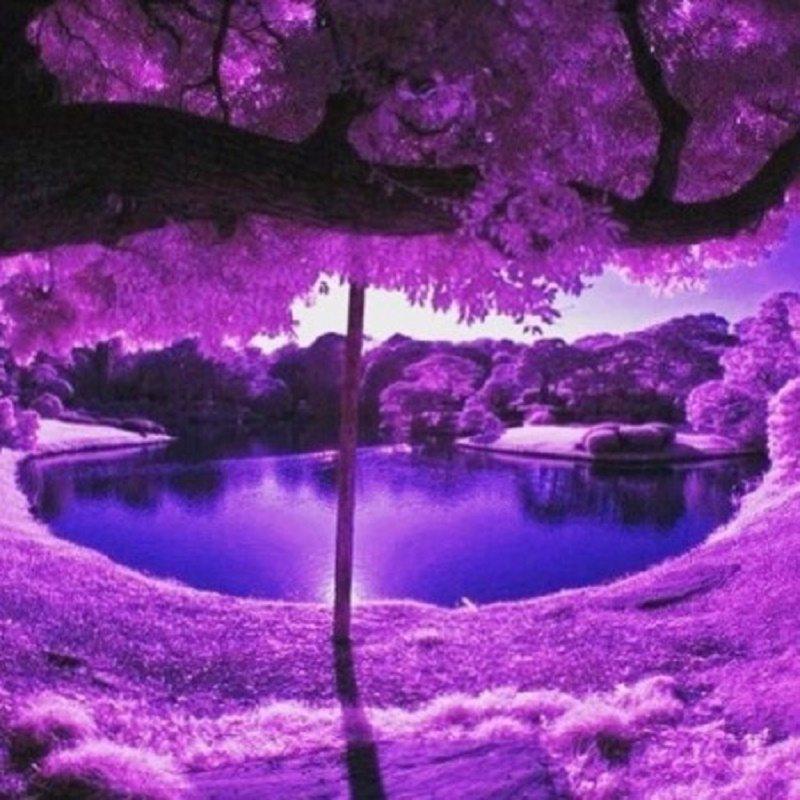 Rest In Purple