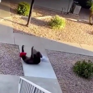 Lorenzo Jones, of Mesa, Arizona was filmed in a viral Facebook video, with his hands up. This was after he was having a discussion with a woman and five children were surrounding him. The Mesa SWAT team told him to put his hands up, but still shot him in the stomach with a bean bag, and as he laid on the ground, grimacing with pain, he was shot in the stomach, again, with a bean bag, told to keep his hands up.