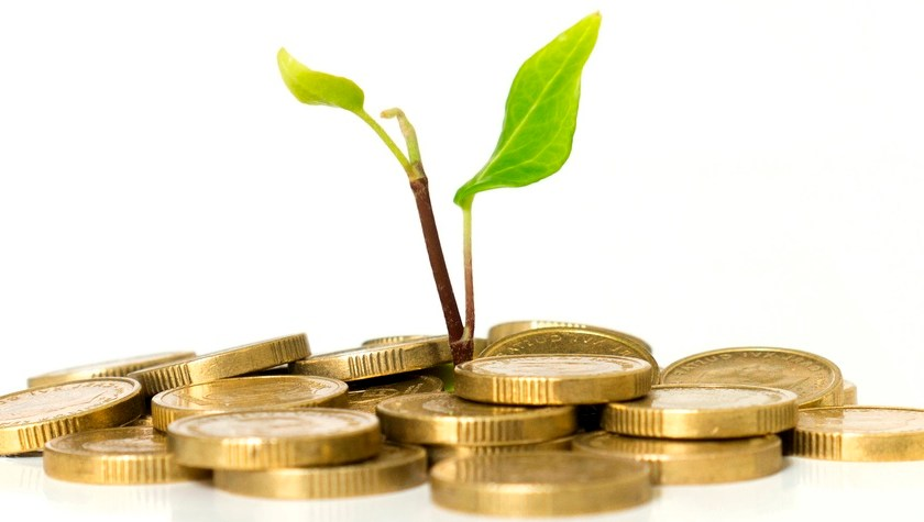 gold coins with a growing plant