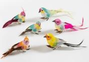 vogels petra boase