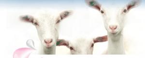geiten kabrita site