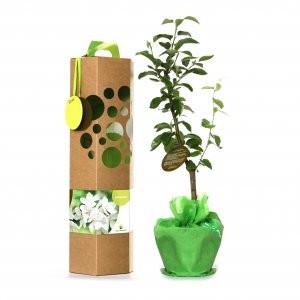 groen perenboompje