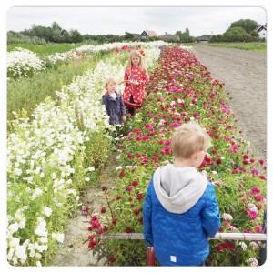 bloempluktuin Hof Hazenberg Aagtekerke
